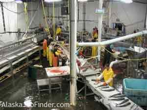 Alaska Fish Processing Plant Slime Line Photo