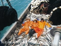 alaska commercial salmon fisheries jobs alaskajobfinder