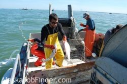 Alaska deckhand jobs work on a commercial fishing boat for Deckhand fishing jobs