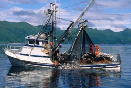 SouthEast Alaska Salmon Purse Seining Boat Photo