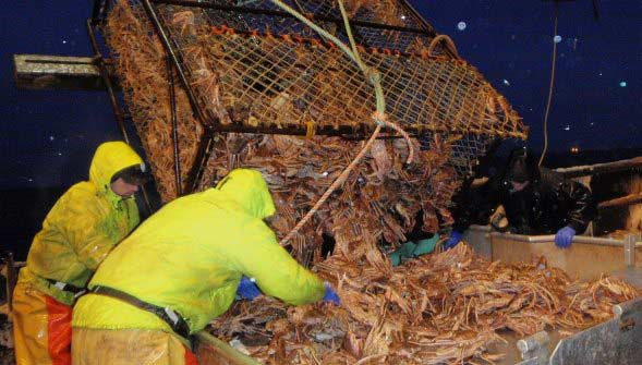 Bering Sea Crab Fishing Deckhands Unloading a King Crab Pot