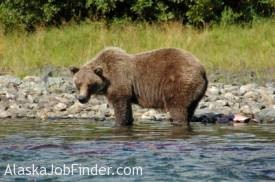 Alaska Wildlife Tour photo