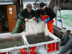 Alaska Aquaculture Work photo