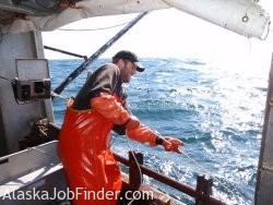 Hauling Alaska Halibut photo