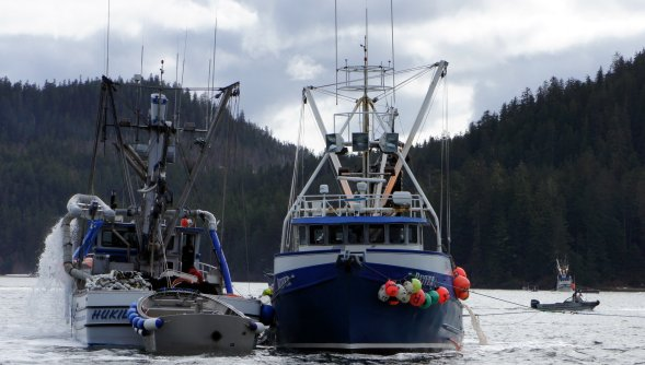 Alaska Salmon Purse Seining Boats