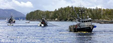 Alaska Greenhorn Seining Jobs photo